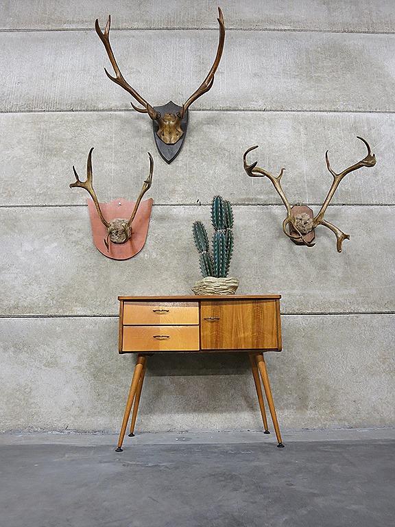 Vintage rendier gewei op schild wanddecoratie, vintage wandkastje ...