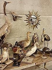 Birds in 'Heaven' opgezette vogels (reiger, eend, gans, duif etc)